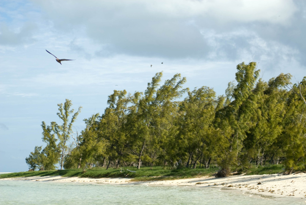 Rodrigues - Isle aux Cocos - Martin Holland