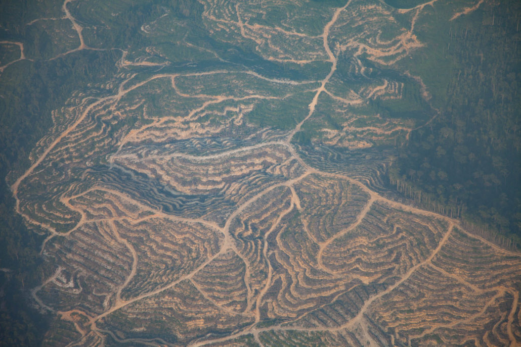 Deforestation Martin Holland Sanduki Expedition Borneo
